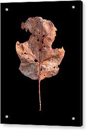 Leaf 24 Acrylic Print
