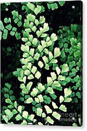 Leaf Abstract 15 Acrylic Print by Sarah Loft