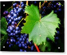 Leaf And Grapes Acrylic Print by Greg Mimbs