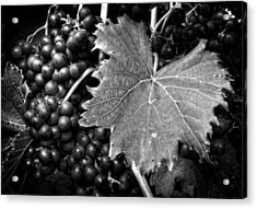 Leaf And Grapes In Black And White Acrylic Print by Greg Mimbs