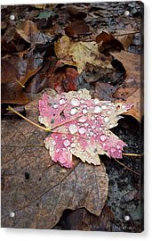 Acrylic Print featuring the photograph Leaf Bling by Kendall McKernon