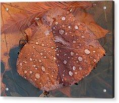 Leaf Blues Acrylic Print by Juergen Roth
