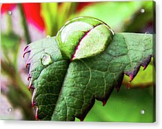Leaf Acrylic Print by Cesar Vieira