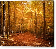 Leaf Covered Pathway In A Golden Forest Acrylic Print by Chantal PhotoPix