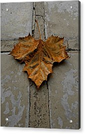 Leaf Cross Acrylic Print