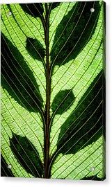 Leaf Detail Acrylic Print