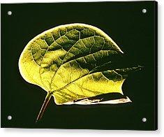 Leaf Detail Acrylic Print by Gerard Fritz