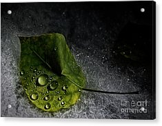 Leaf Droplets Acrylic Print