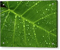 Leaf Drops Acrylic Print by Art Shimamura