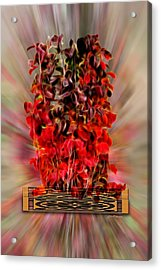 Leaf Explosion Acrylic Print by Ericamaxine Price