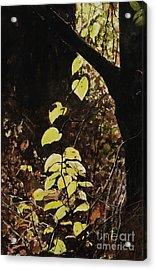 Leaf Glow Acrylic Print by Carla Dabney