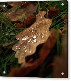 Leaf In Autumn. Acrylic Print by Bernard Jaubert