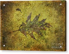Acrylic Print featuring the digital art Leaf In Mud Two by Randy Steele