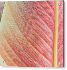 Leaf In Pink  Acrylic Print