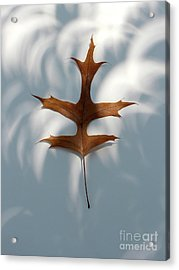 Leaf In The Eclipse  Acrylic Print