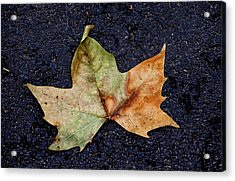 Leaf In The Road Acrylic Print by Robert Ullmann