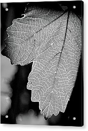 Leaf Light Black And White Acrylic Print by James Granberry