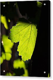 Leaf Light I Acrylic Print