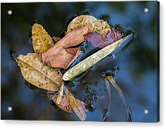 Acrylic Print featuring the photograph Leaf Litter In Pond, Navegaon, 2011 by Hitendra SINKAR