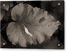 Leaf On A Leaf Acrylic Print