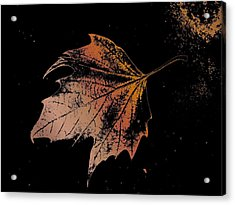 Leaf On Bricks Acrylic Print by Tim Allen