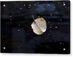 Leaf On Car Door Acrylic Print by Robert Ullmann