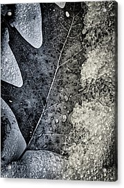 Leaf On Ice Acrylic Print