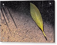 Leaf On Street Acrylic Print