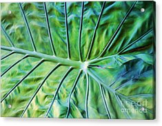 Leaf Pattern Acrylic Print
