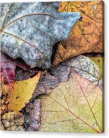 Leaf Pile Up Acrylic Print by Todd Breitling