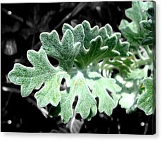 Nature Acrylic Print featuring the photograph Leaf by Roberto Alamino