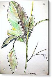 Leaf  Acrylic Print by Scott Easom