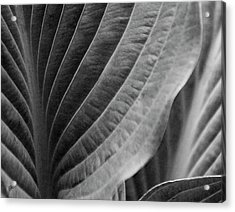 Leaf - So Many Ways Acrylic Print by Ben and Raisa Gertsberg