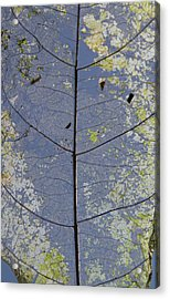 Acrylic Print featuring the photograph Leaf Structure by Debbie Cundy