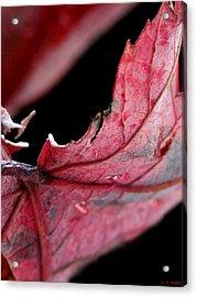 Leaf Study I Acrylic Print