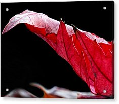 Leaf Study IIi Acrylic Print