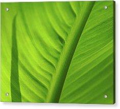 Leaf Study Acrylic Print