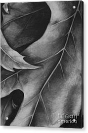 Leaf The Final Stage Acrylic Print by Jamey Balester