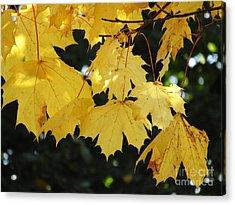 Leaf Wind Chimes Acrylic Print
