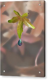 Leaf With Droplet Acrylic Print by Peter Hill