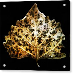 Acrylic Print featuring the photograph Leaf With Green Spots by Joseph Frank Baraba