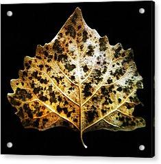 Leaf With Green Spots Acrylic Print by Joseph Frank Baraba