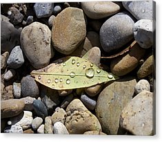 Leaf With Water Droplets In Rocks Acrylic Print