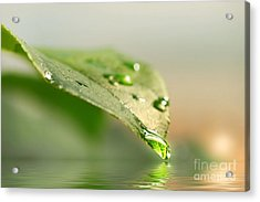 Leaf With Water Droplets Acrylic Print by Sandra Cunningham