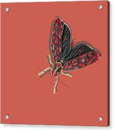 Leafhopper Acrylic Print by Jude Labuszewski