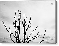 Leafless Tree Acrylic Print
