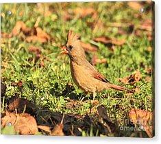 Leafy Cardinal Acrylic Print