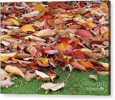 Leafy Lawn Acrylic Print