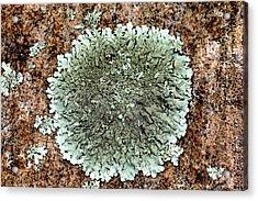 Leafy Lichen Acrylic Print