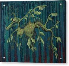 Leafy Sea Dragon Acrylic Print by Kelly Jade King